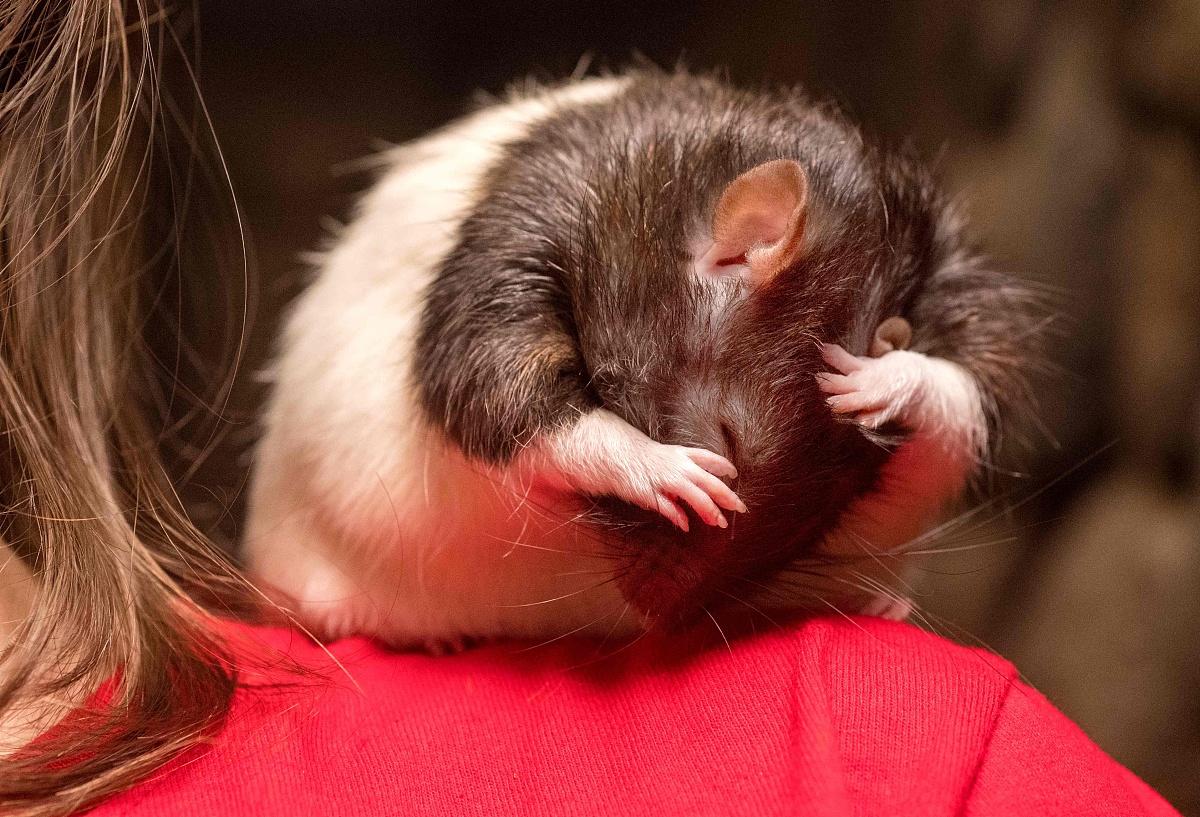 属鼠84年36岁需要注意什么属鼠2020容易离婚