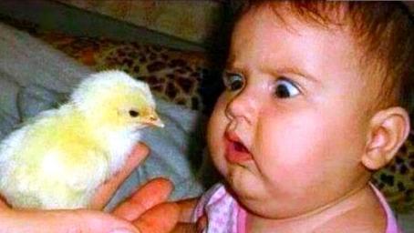 妈妈买了只小鸡,宝宝喜欢的不得了,接下来发生的一幕看完不许笑
