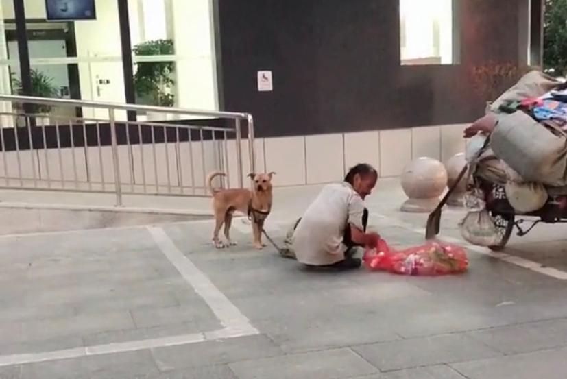 一位收废品老大爷救助一只受伤流浪狗,狗狗哭了,人间自有真情在