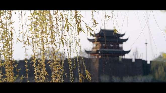 今天,想请你到苏州看春暖花开