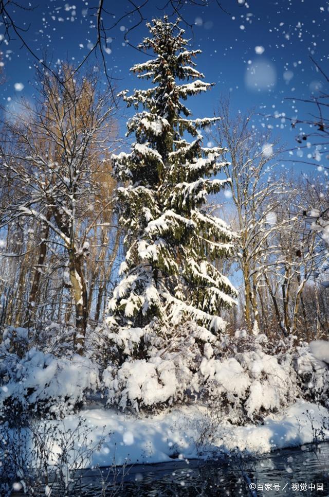 小学生想要写好作文,离不开阅读摘抄,收藏关于冬天的好句好段