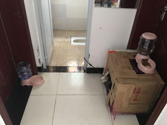 出门几天,让二哈自己看门,它吃饭的姿势有些费劲!