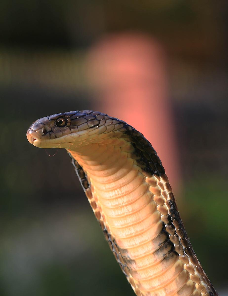 属蛇最佳婚配属相 女生肖蛇的最佳配偶
