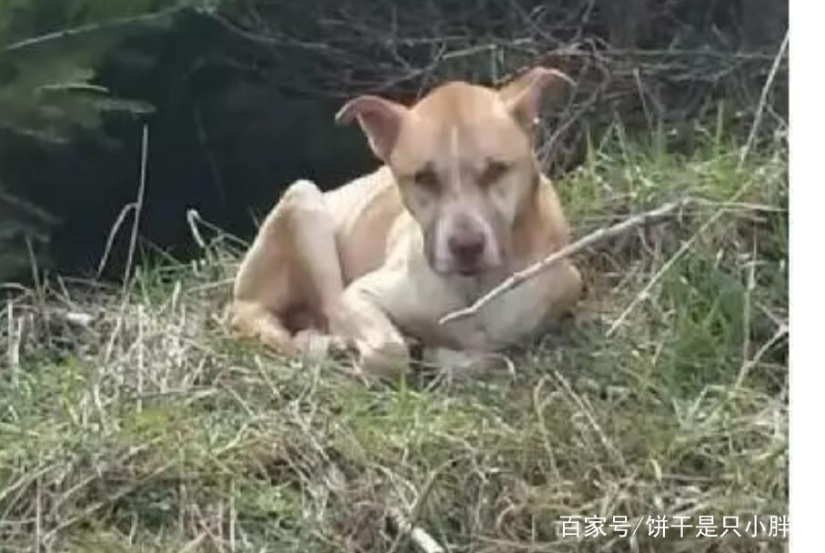一对姐妹爬山遇到流浪狗,用智慧将它救助,狗狗开始了新的生活