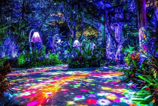 广州长隆神奇动物夜惊艳朋友圈,星空童话、幻彩雨林等你邂逅!