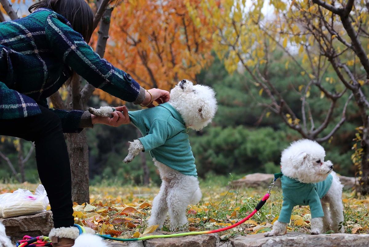 宠物会不会传染病毒?疫情期间养宠物需要注意什么?进来看看