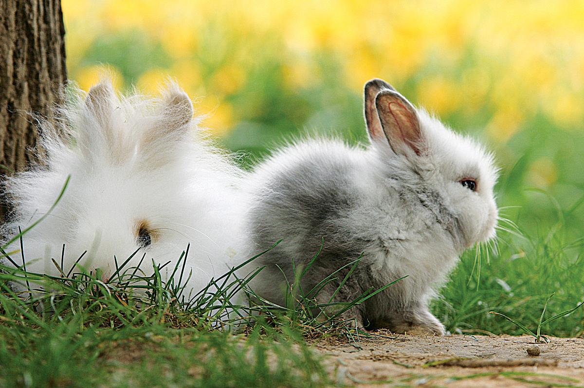 属兔的超级贵人属兔2020年运势