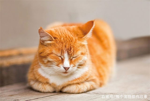 """""""猫有九条命""""这个说法到底从何而来,它表达的是什么意思"""