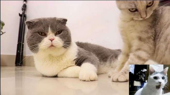 成精以后的猫咪会发生哪些有趣的事情?