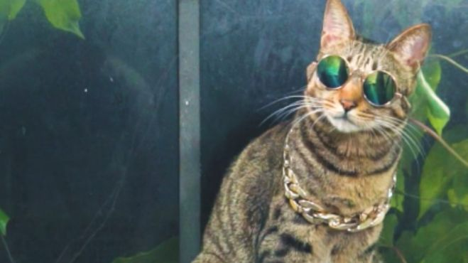 八二年的拉菲:拉菲为了能吃上猫粮,居然阻止主人谈恋爱