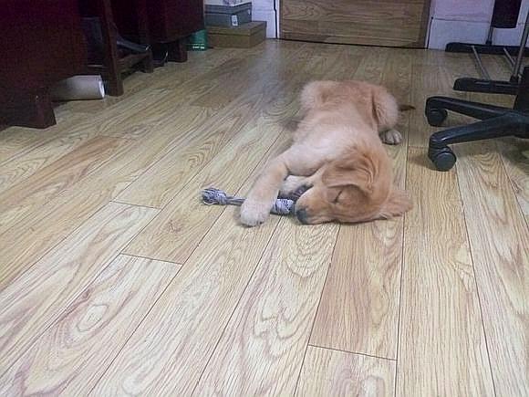 睡着了都不放下,这玩心还真大,宠主:醒了还得玩!