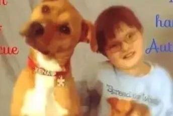 好心人意外领养一只流浪狗,竟然让儿子的自闭症痊愈了,意外收获
