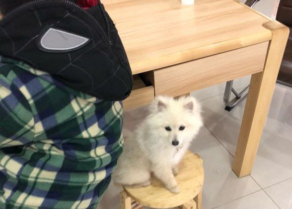 网友打开仓库门发现一只小狗,它一直跟着网友,带回家后......