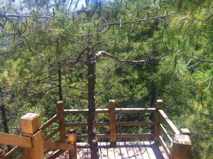 景区三横梁仿木栏杆