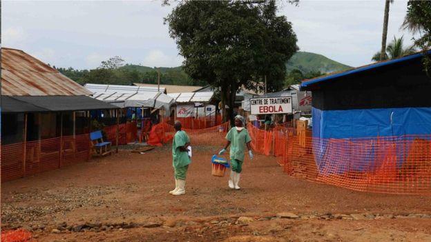 科学家得出结论称,这种新型埃博拉病毒的爆发始于一个人:一个来自几内亚的两岁男孩,后者判断可能是在蝙蝠群聚的空心树上玩耍时被感染的。