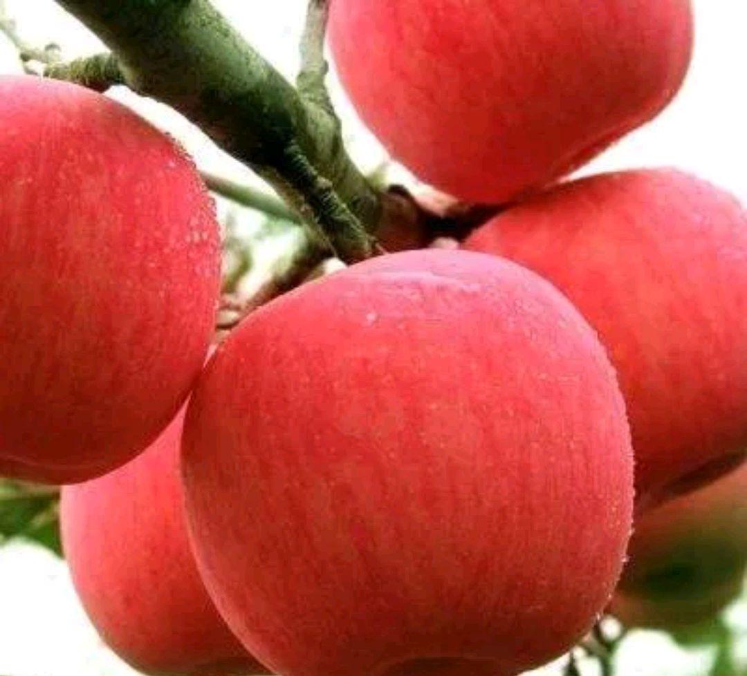 灵宝市何军郑州地铁一号线推介灵宝苹果