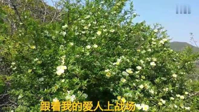 马榴花开(2016.5.1)
