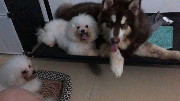 养了三年的狗狗,突然就被逼着送走,网友:不送!