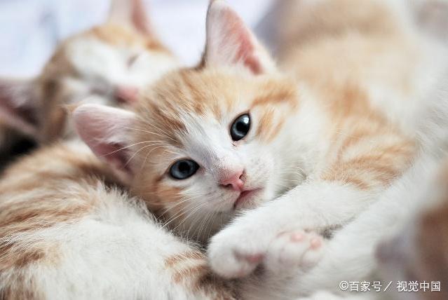 对猫毛不适还想撸猫,了解这几点,让你轻松吸猫