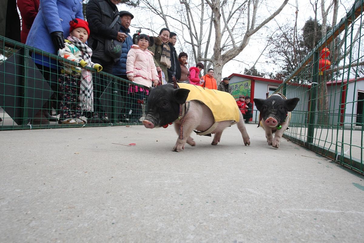 属猪的人今日运势财运在哪方向 属猪的几月出生财运旺