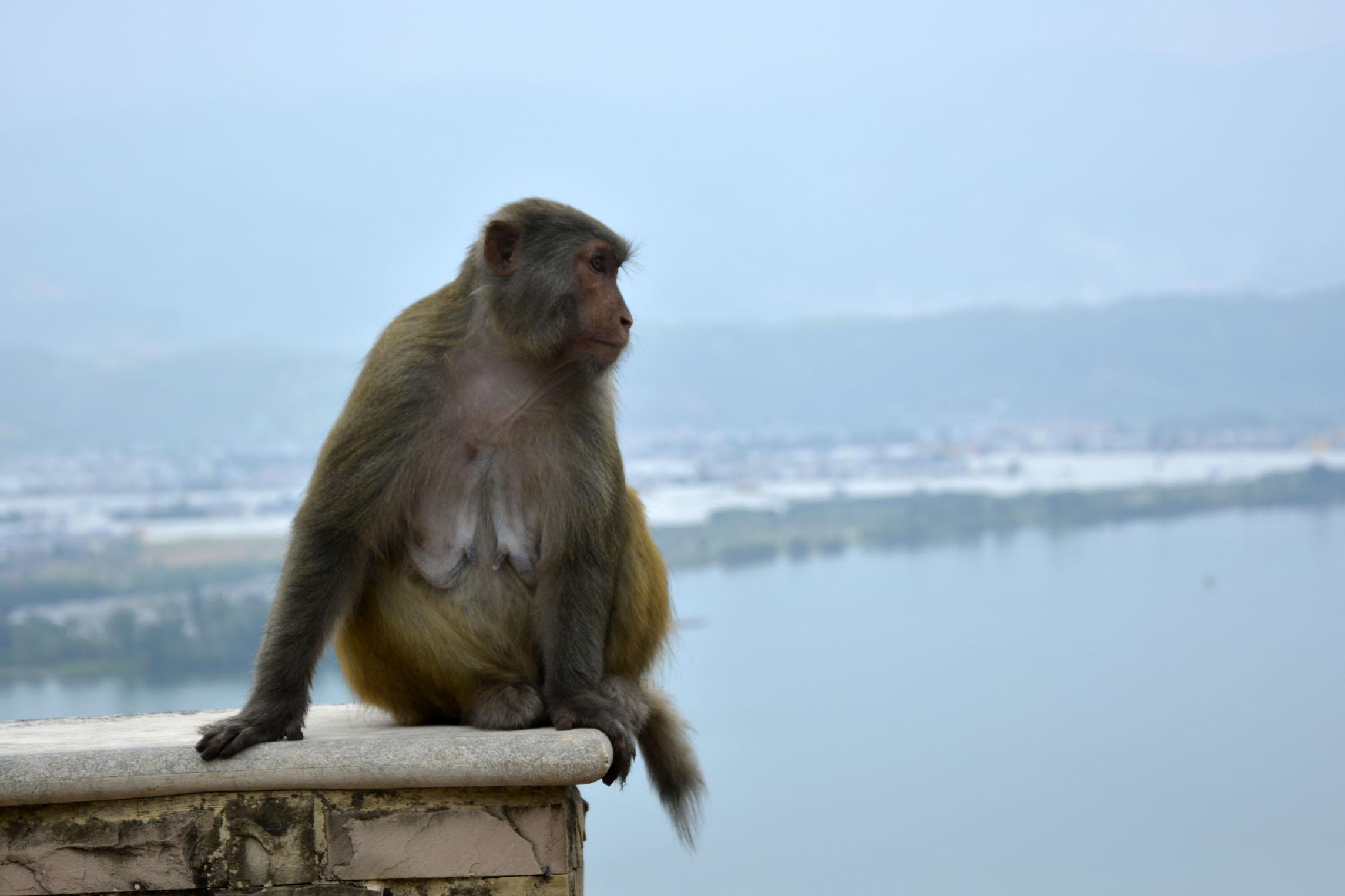 属猴男和什么属相最配92年属猴男的属相婚配表