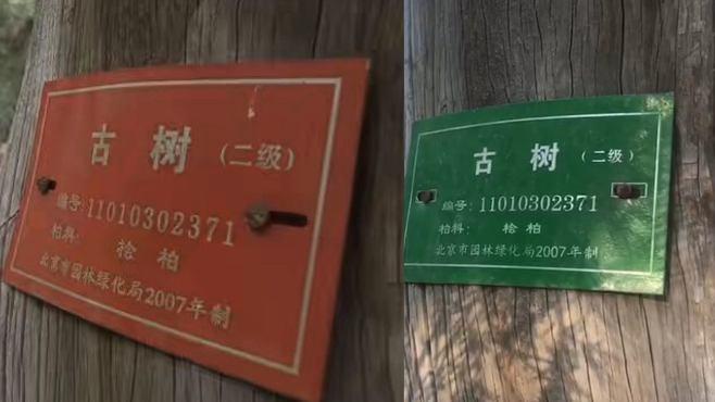 """乌龙!天坛公园部分古树挂错""""身份证"""",经游客指出现已更正"""