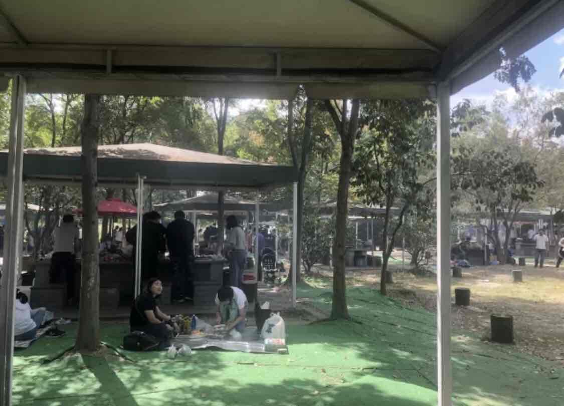 上海动物园和野生动物园哪个更值得去? 动物园 动物 上海动物园 上海旅游 旅游问答  第1张