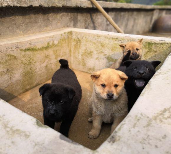 小狗开始会跑了,网友没时间看着,把它们放到这里了