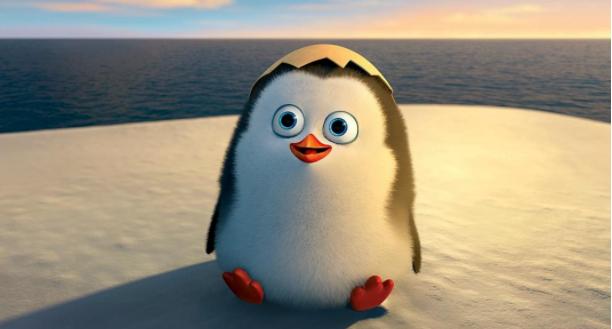 马达加斯加的企鹅,一群小可爱,充满童心的回忆!