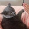 #家有萌宠#伪装成孕妇,猫会对我特别温柔吗?猫:我慌了!