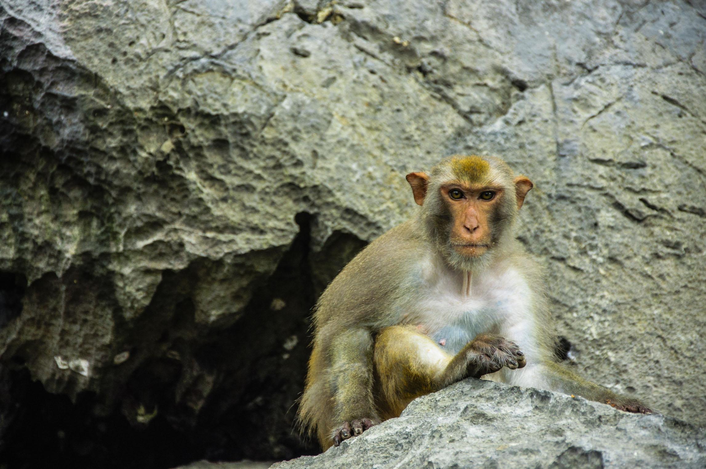 生肖猴的财运贵人 生肖牛的贵人属相