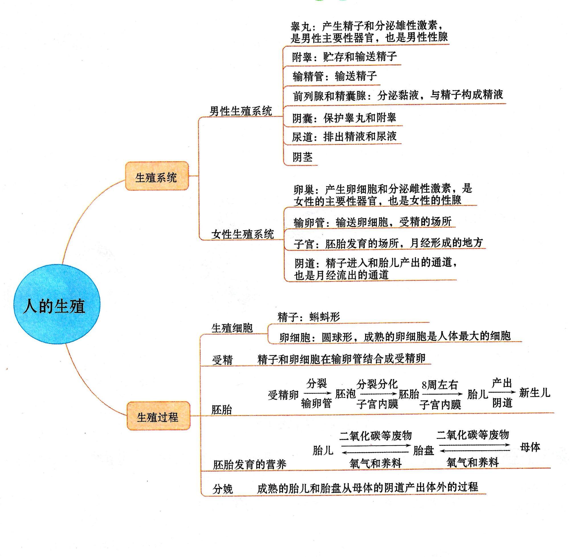 人的生殖(受精、胚胎发育)微课和思维导图