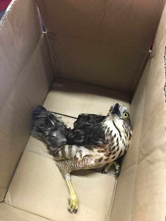 干活的时候捡到一个受伤的鸟,网友把它带回家养了起来