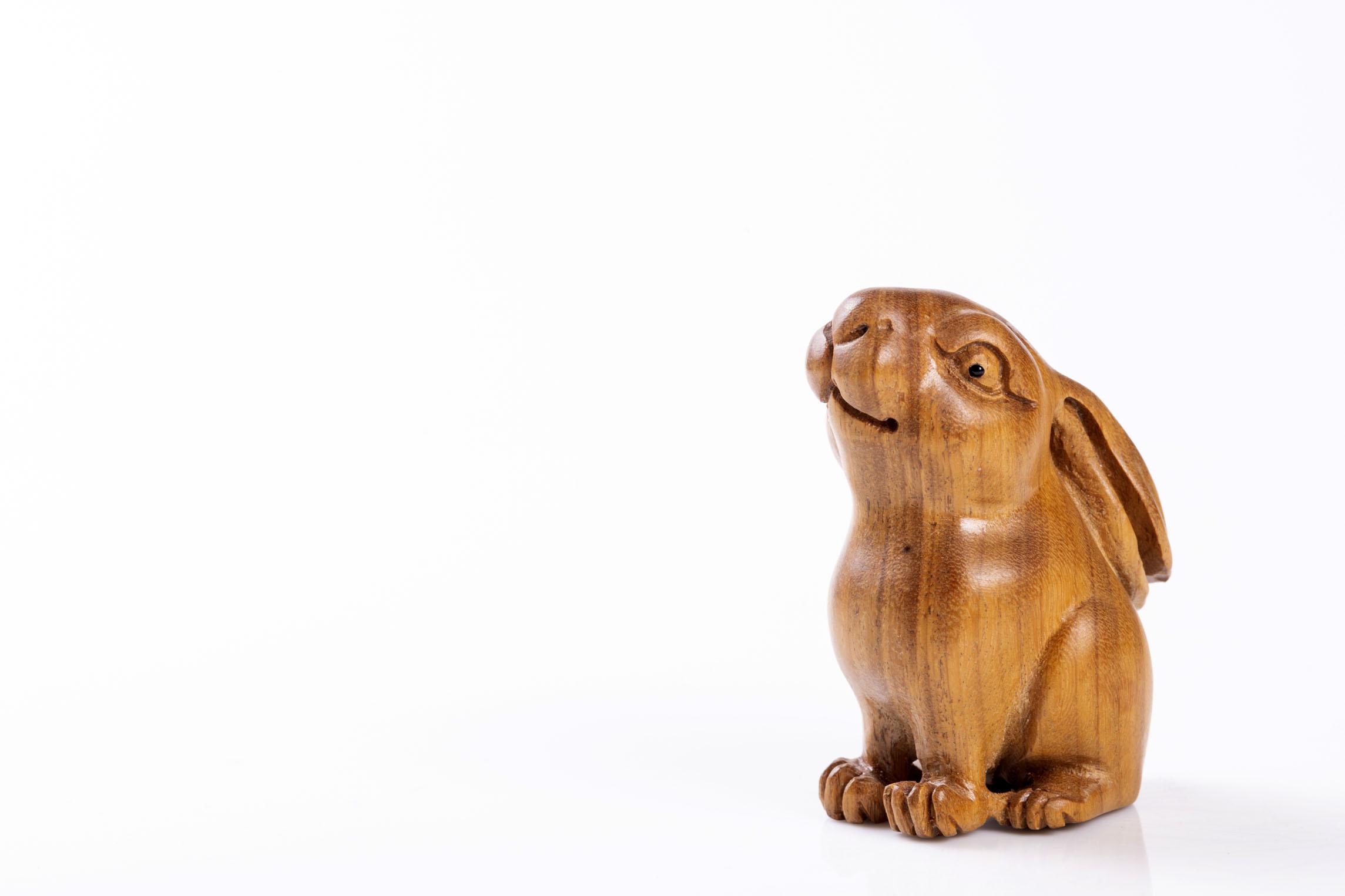 属兔养什么花旺财 属兔养什么植物旺财