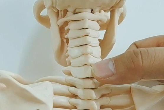 脊椎矫正之《脊柱体表标志一》