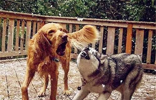 """这5种狗狗最""""烧钱""""了,没钱不要养,专家:给你拆破产!"""