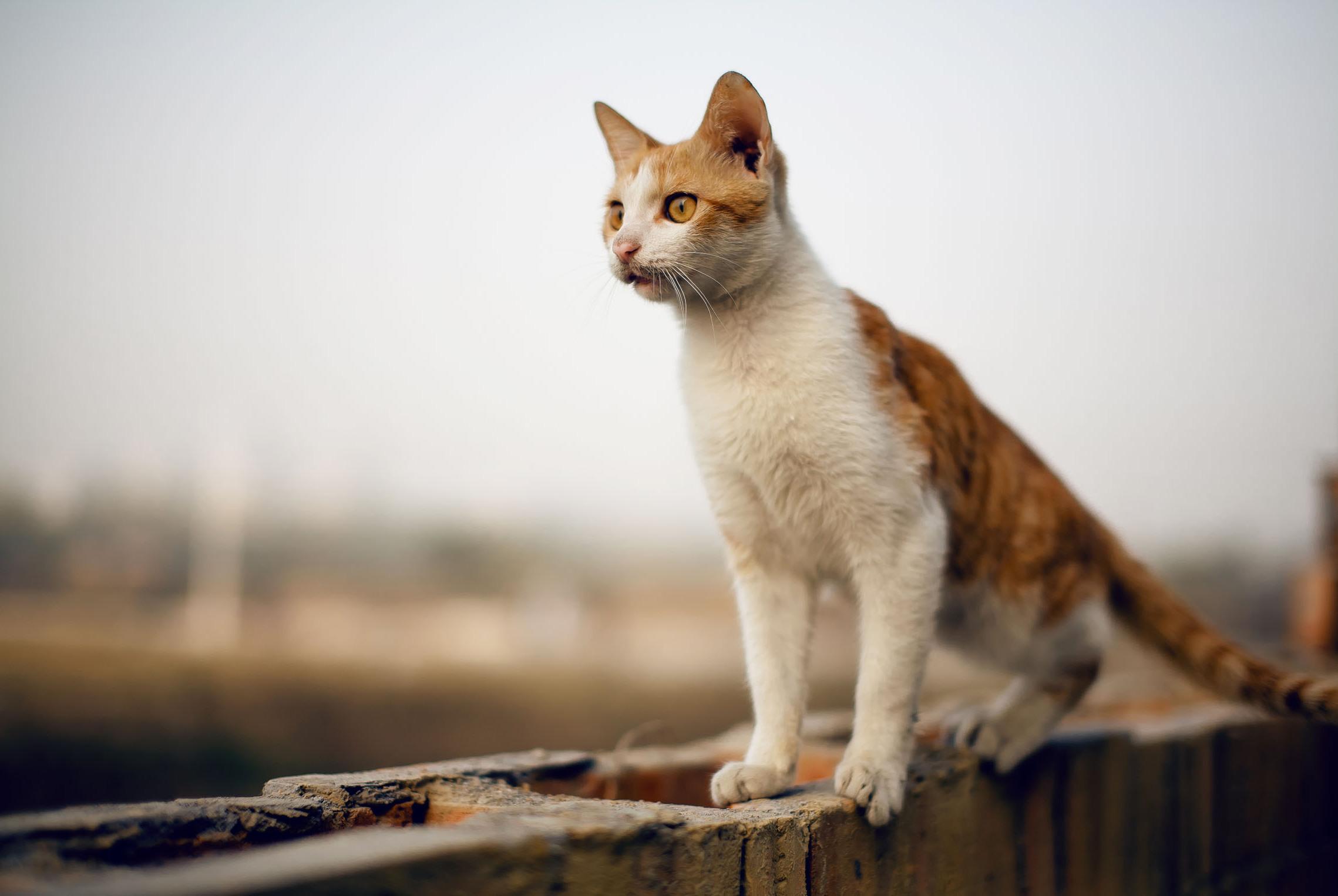 猫咪吃零食有利也有弊,应该喂哪些零食及喂食建议!进来看看