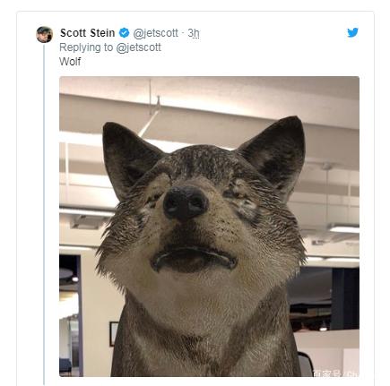 """谷歌搜索现已加入AR技术 用户可以""""招出""""动物 AR资讯 第4张"""