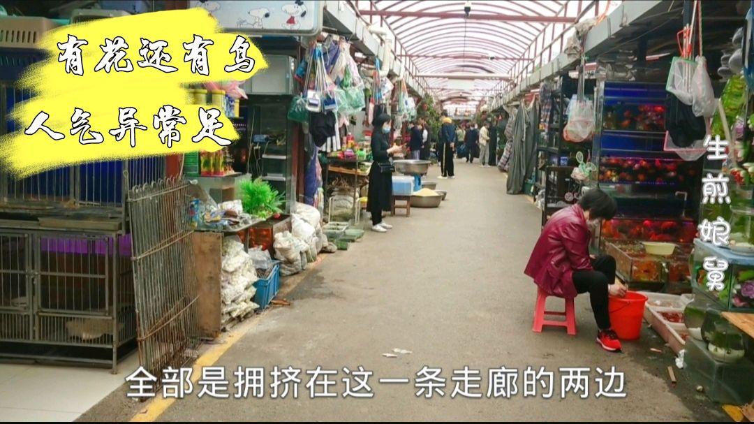 上海闵行区梅陇花鸟市场,鹦鹉鸟类众多,旁边就是古玩一条街