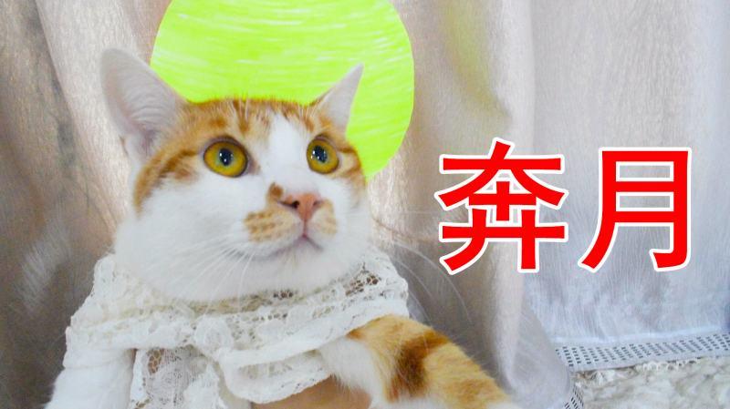 零号岳父_橘猫演技爆发,上演了一出奔月大戏,主人:太秀了!_好看视频