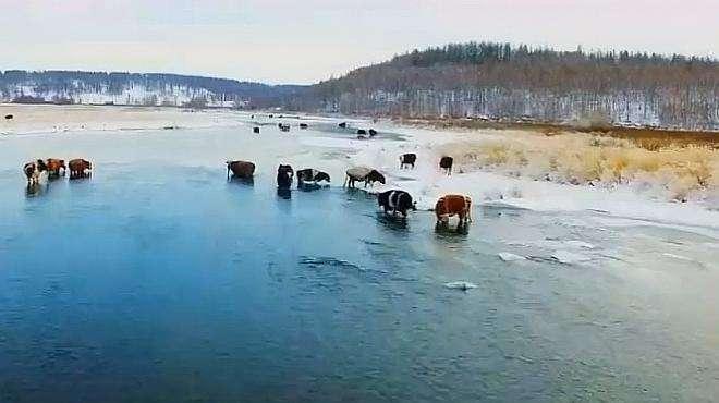 阿尔山的冰雪美如画,冰雪节更是美!到处冰冻下却有条不冻河神奇