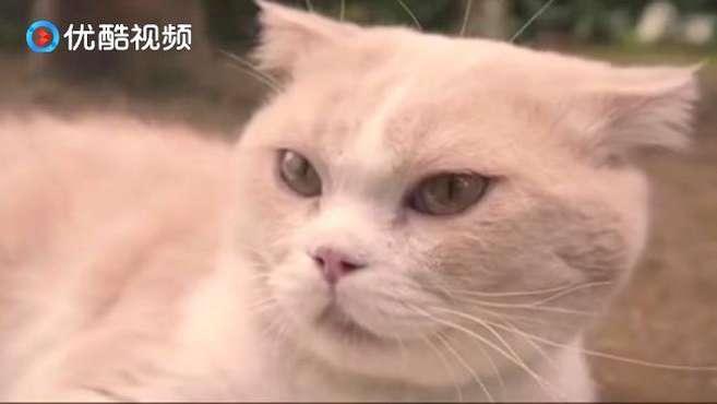 佐久本胜的小说恶评如潮心烦意乱 ,转移注意力逗猫