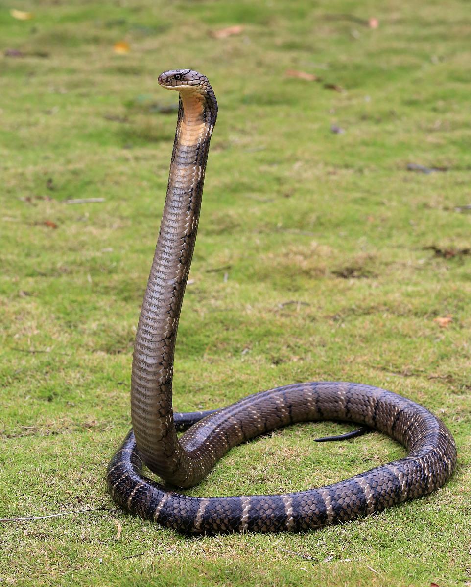 蛇和什么属相最配 属蛇的几月出生最好