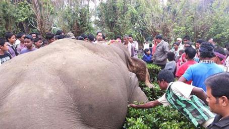 为什么大象死后最好别碰?外国一男子不信邪,碰完就悲剧了!