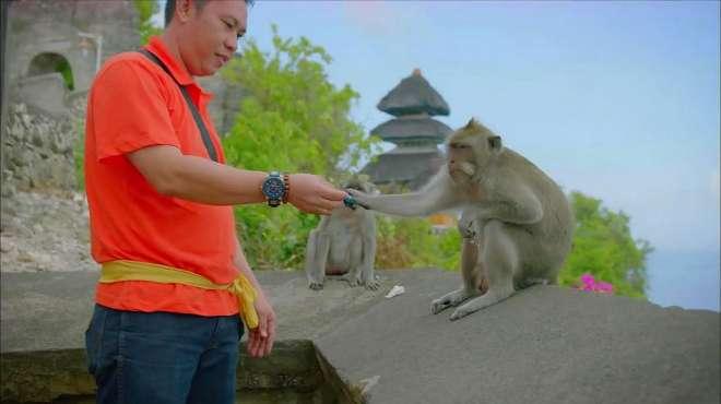 泰国景区猴子成土匪,游客物品被明抢,只能用食物交换回来!
