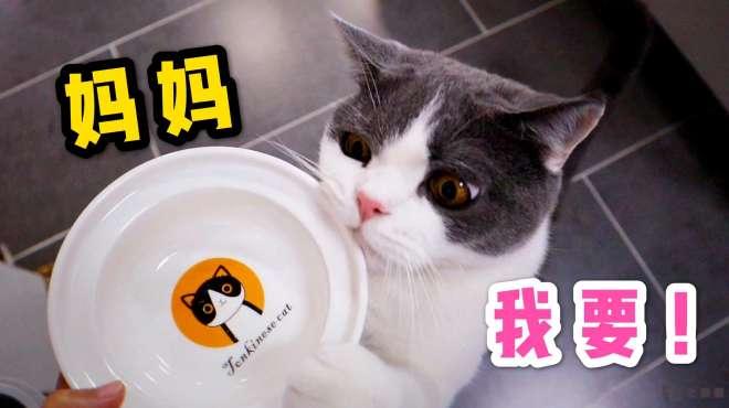 """拿了猫咪的碗!急的猫咪都学会说""""要""""了!"""