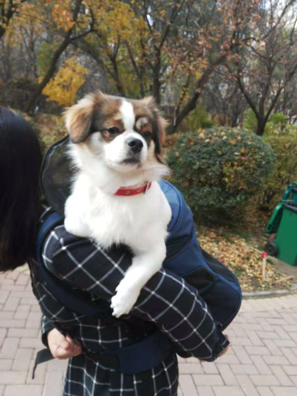 网友刚买了个包,专门是为了背着狗狗的,抱着它太累