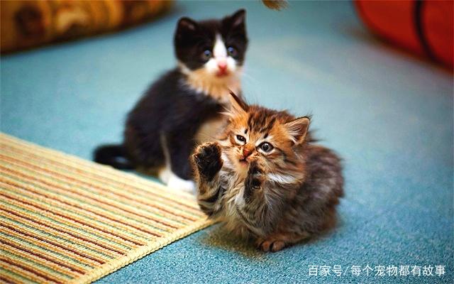 小猫咪不爱喝水怎么办,五个小妙招帮你搞定不爱喝水的猫咪