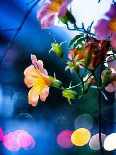 【森萝财团视频】 森萝财团写真 – JKFUN-056 80D白色过膝袜 卉子 [高清原版视频在线播放]