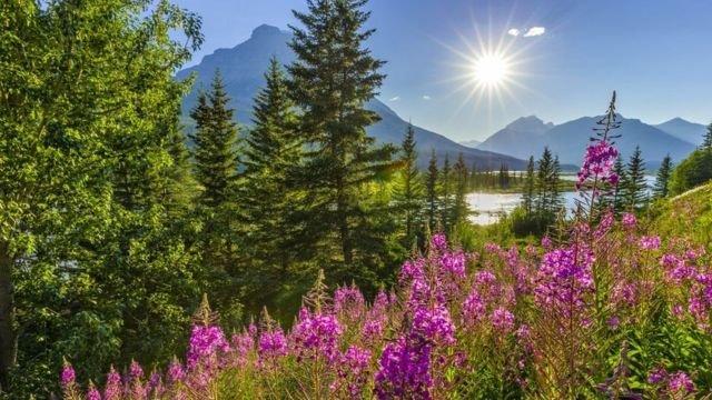 图像加注文字, 有日落就有日出,有生命就有希望。